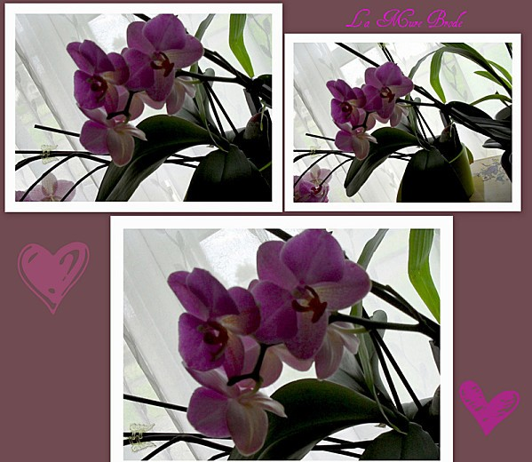 2012-07-22-orchidee---gigoin-m-inspire---mesanges1.jpg