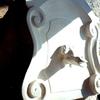 Grenouille sautant sur haut de porte en pierre bleue