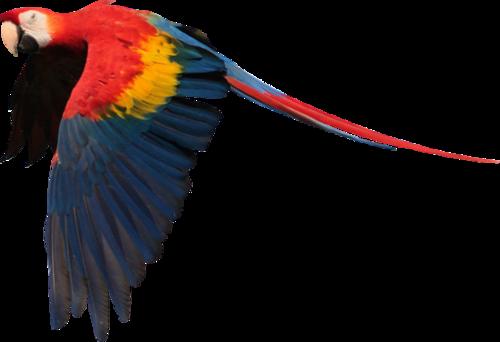 Tubes oiseaux des îles en PNG