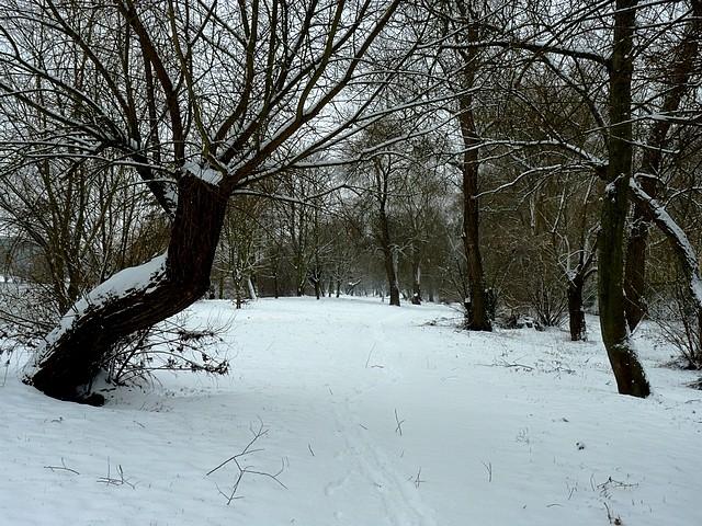 Cygnes en hiver 2 Marc de Metz 06 03 2013
