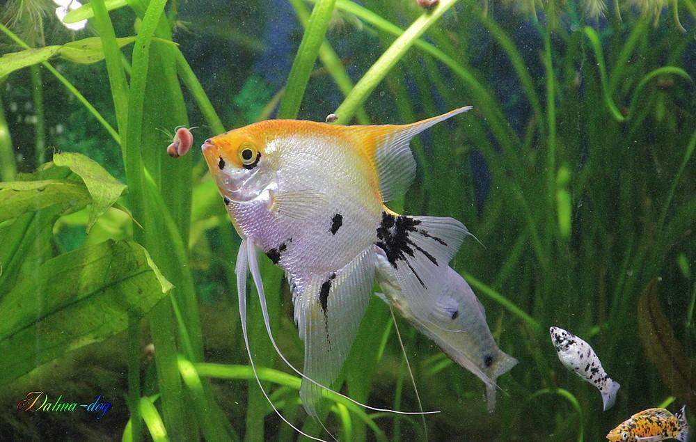 poissons d'aquarium de chez nos amis