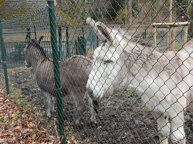 Les ânes et le parc Josaphat