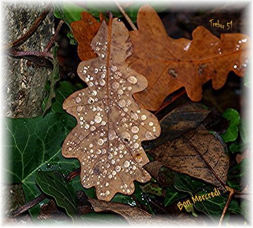 Encore quelque feuilles.....
