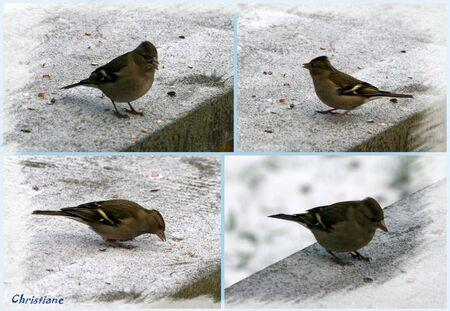oiseaux_b