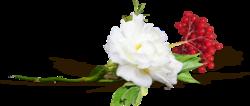 """""""Fleur à la boutonnière"""" ..."""