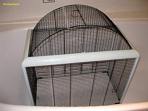 Nettoyage-cage-fifi-juin-2011 1335 (Copier)