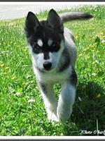 Maïko (3 mois)