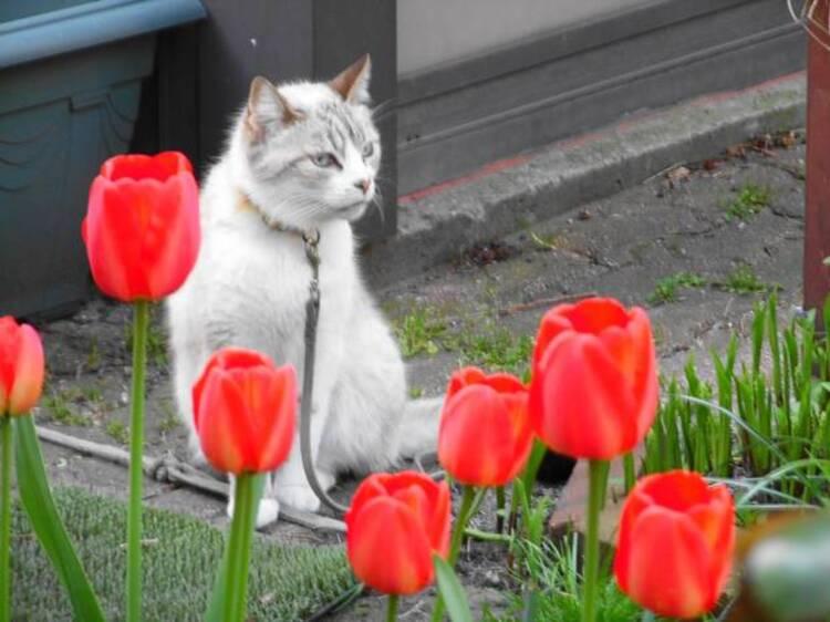 Concours la photo du mois d'avril (Communauté Le concours de la photo du mois)