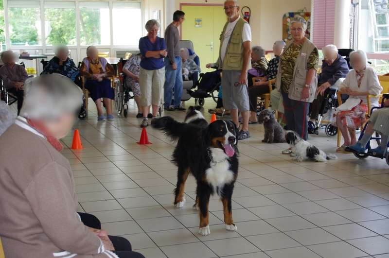 Animation canine à la maison de retraite de St Georges d'Oléron le 05 juin 2012
