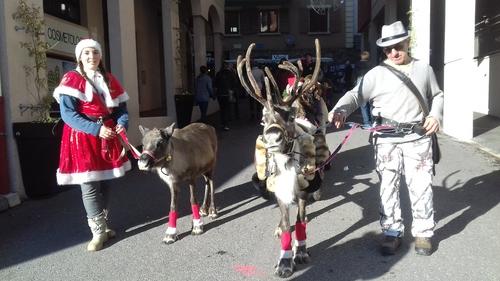 Les rennes au marché de noël !