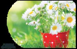 Fleurs plantes (page 2 )