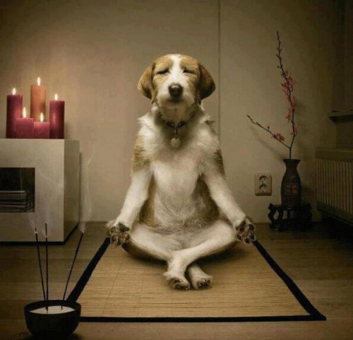 Débuter méditation guidée