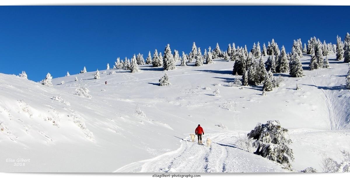 Lure au creux de l'hiver #1