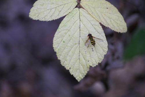 rappel : partage photos de septembre (légumes et fruits et/ou insectes)