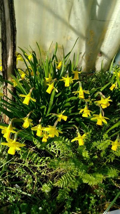Au coeur de mon jardin - Fleurs de mars