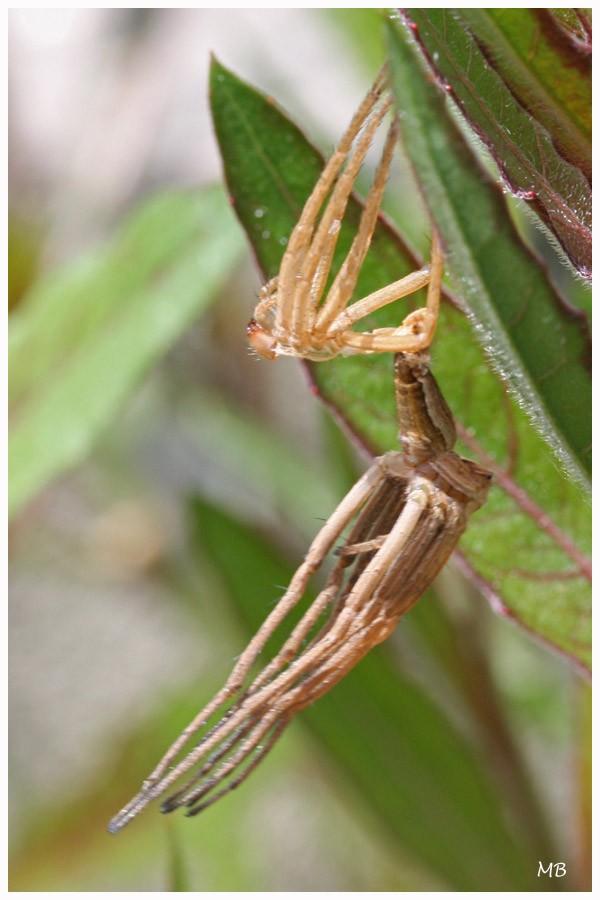 Arachnides-03-2637.jpg