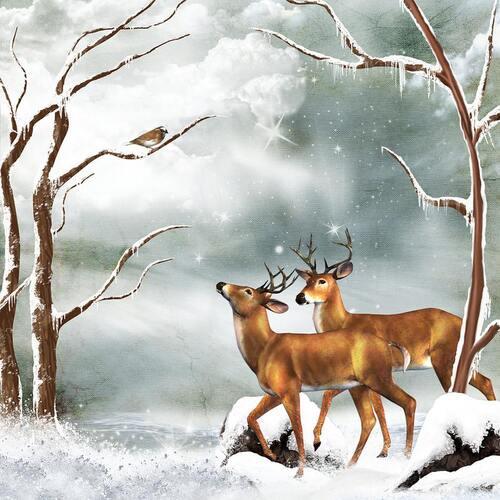 hiver en forêt !