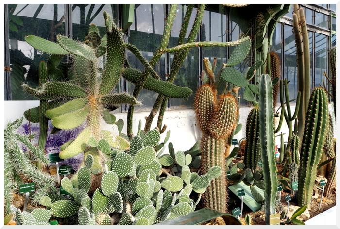 Grandes Serres Jardin des Plantes.
