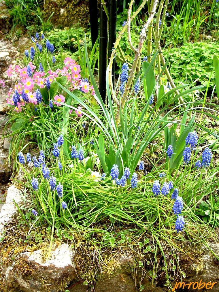 Avec le printemps, c'est toujours un spectacle dans le jardin