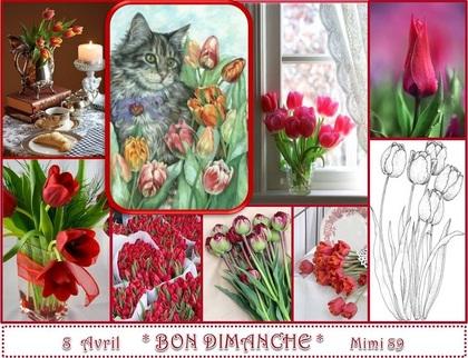 Bon Dimanche ! La Tulipe et le Chat .....