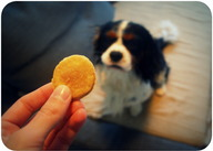 Recette biscuits au thon