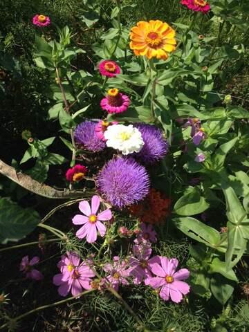 Seeds of Love : Portrait d'Anciens : Silvia