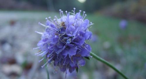 fleur sauvage dans la nature tourangelle