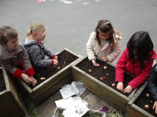Plantations de bulbes en maternelle