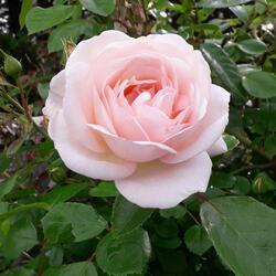 Du rose, de la couleur