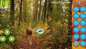 Jouer à Magical autumn forest adventure