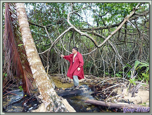 Blog de images-du-pays-des-ours : Images du Pays des Ours (et d'ailleurs ...), Promenade dans la forêt / mangrove - Isla Bastimentos - Bocas Del Toro - Panama