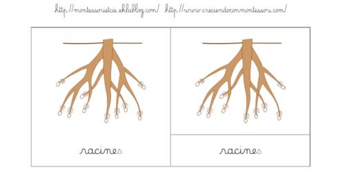 Nomenclatures : Les différentes parties de la racine (puzzle)