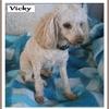 Vicky 1