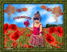 * Coquelicots *