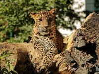 Zoo de Maubeuge : 10 septembre 2015