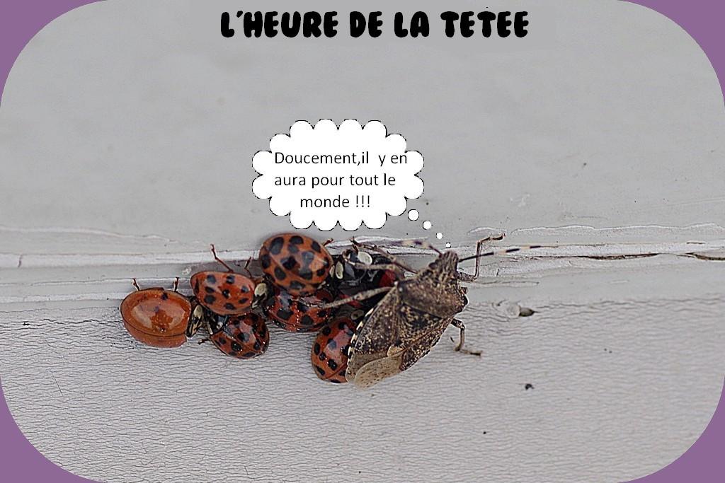 PAGE D'HUMOUR DU DIMANCHE