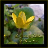 Jardiner avec la lune du 21 au 31 Mars 2016