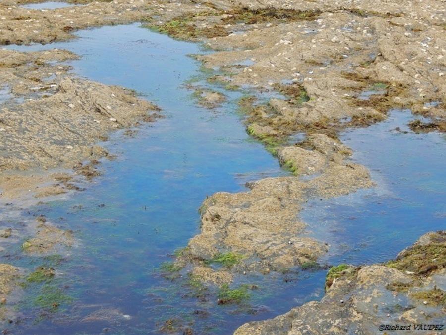 Marée basse à Portmain