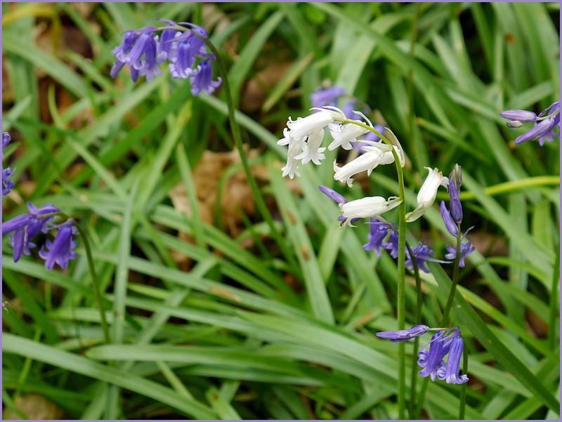 Un 1er mai en bleu mauve