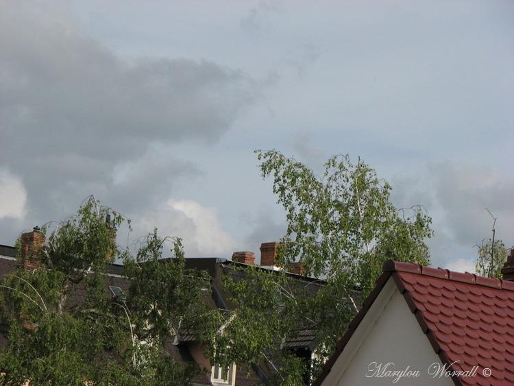 Ciel d'Alsace 468