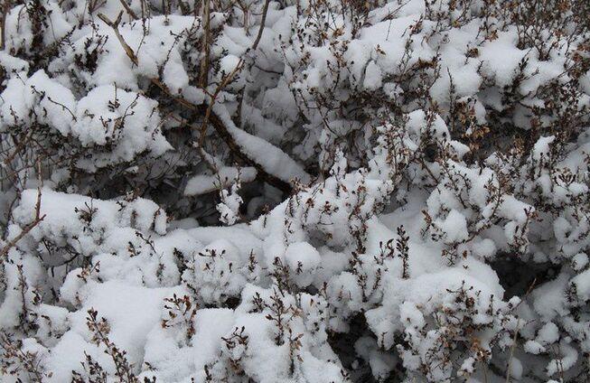Neige en Monts d'Arrée 085