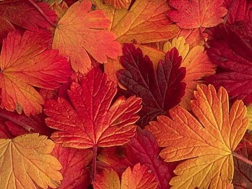 automne joliecarte1