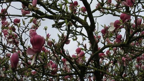 """Série Photographique, """"Magnolia"""""""