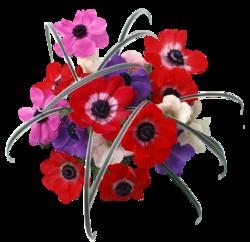 Quelques jolies fleurs