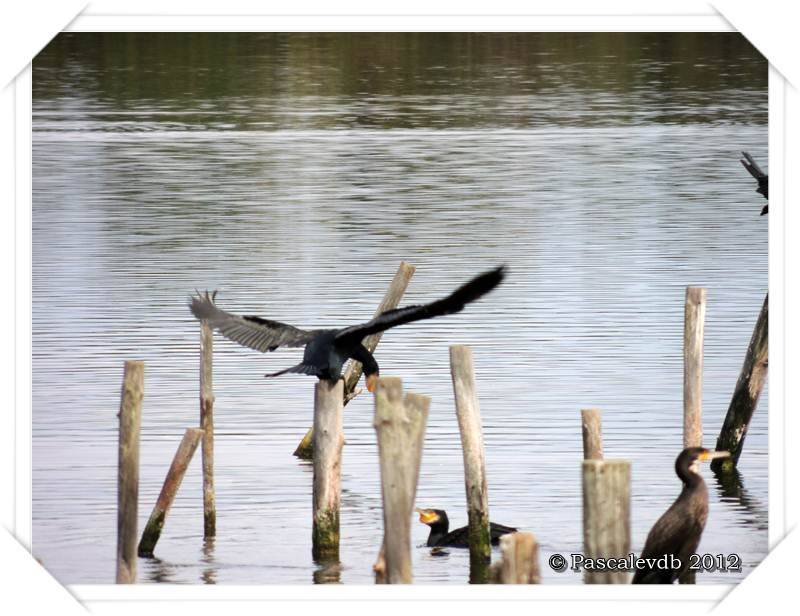 Visite à la réserve ornithologique du Teich - 4/8