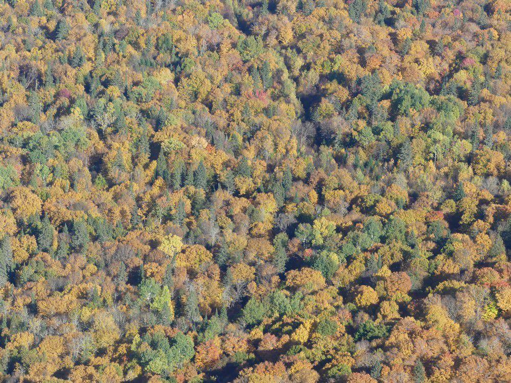 Journée internationale de la forêt...