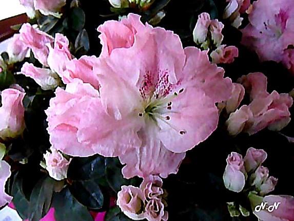 floralie.jpg