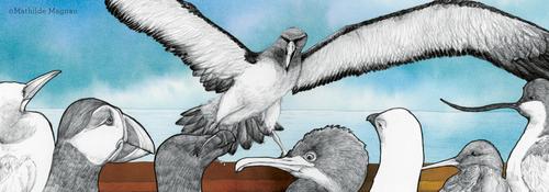 L'albatros - Charles Baudelaire -