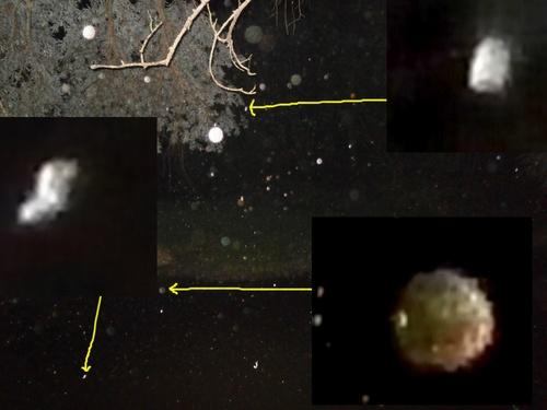 orbes 37-0008 B et C