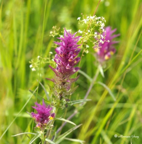 fleur-9988.jpg